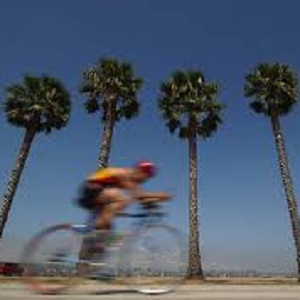 Cyclist with Palm Trees