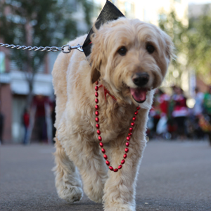 downtown san diego gaslamp quarter holiday pet parade