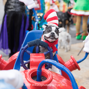 downtown san diego gaslamp quarter holiday pet parade