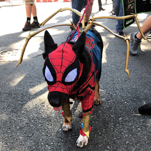 Comic Con Recap Dog 300x300