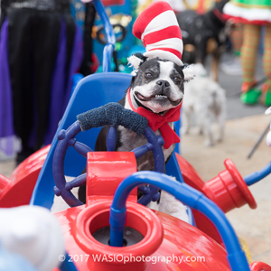 Pet-Parade-2 gaslamp san diego