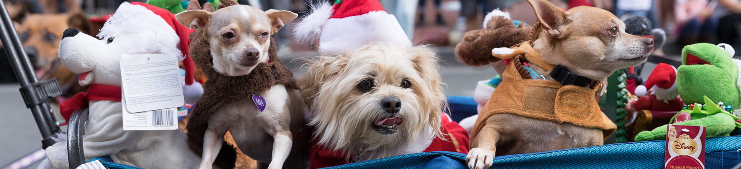 Pet-Parade-header-1500x342 gaslamp san diego